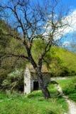 Hus och träd arkivbilder