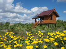 Hus och trädgård Arkivbilder