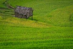 Hus på den terrasserade risfältet i Mu Cang Chai, Vietnam Royaltyfri Bild