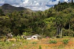 Hus på kanten av djungeln Royaltyfri Foto
