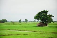 Hus på risfältfältet som lokaliseras i Bago, Myanmar Arkivbilder