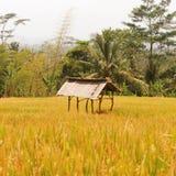 Hus runt om ricefielden Royaltyfria Foton