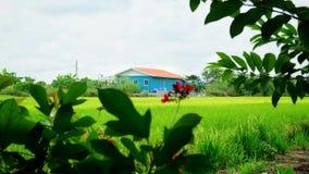 hus som skiner liten sunvinter Arkivbild
