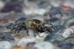 Hus Spider_03 Arkivbilder