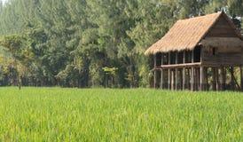Hus vid fältet av lantliga Thailand Royaltyfri Fotografi