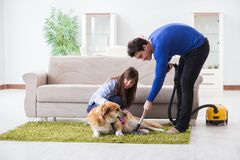 The husband cleaning house from dog fur stock photo