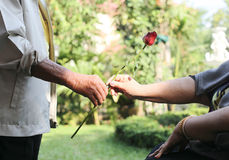Husband giving rose to his wife Stock Photography
