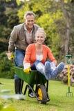 Husband pushing wife in a wheelbarrow Stock Photos