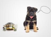 Husdjur gratulerar lycklig ferie fotografering för bildbyråer