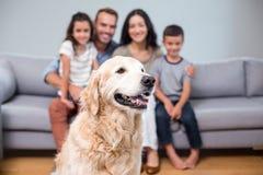 Husdjur i vardagsrum- och familjsammanträde på soffan Royaltyfri Fotografi