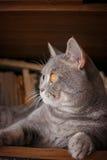 Husdjur: katten spelar på hyllan med böcker arkivbilder