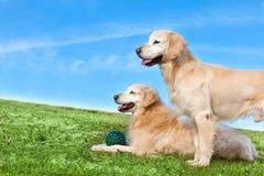 Husdjur och hundkapplöpning utbilda och utbilda hundkapplöpning royaltyfria bilder
