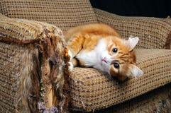 Husdjur och möblemang Arkivbilder