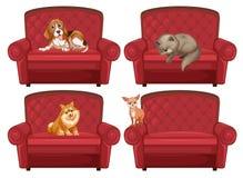 Husdjur på soffan royaltyfri illustrationer