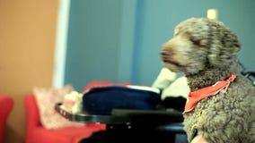 Husdjur som används för zootherapy lager videofilmer