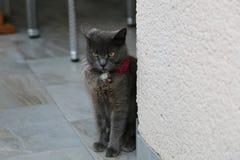 Husdjuren - den ilskna härliga gråa katten arkivfoto