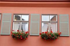 Huset från väggen med två fönsterrosa färger blommar och hänger upp gardiner i lilla staden av Dinkelsbuhl i Tyskland Royaltyfri Bild