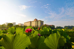 Huset med en fin trädgård och en blomstra lotusblomma Royaltyfri Bild