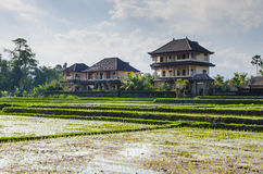 Huset och ricen Arkivbild
