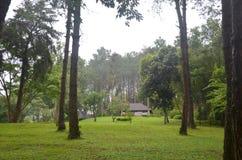 Huset sörjer in trädskogen på Pang Ung på Mae Hong Son Arkivbild
