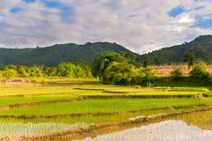 husk nepal rice arkivbilder