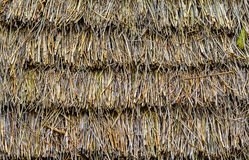 Husk roof of a village house Royalty Free Stock Photos