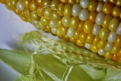 Husk, silk and kernel of corn Stock Images
