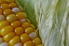 Husk, silk and kernel of corn Stock Photo