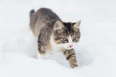 Huskatt i snön Arkivbild