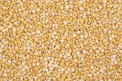 Husked brown gram pulse. Close up of seeds of husked brown gram pulse Stock Photography