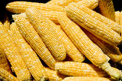Husked Corn. Freshly husked corn all piled up ready for cooking Royalty Free Stock Images