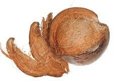 Husked Ripe Coconut Stock Image