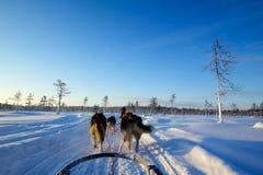 Huskies στο Lapland Στοκ εικόνες με δικαίωμα ελεύθερης χρήσης