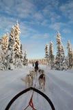 Huskies die hondslee trekt royalty-vrije stock fotografie