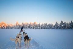 Huskies die hondslee trekt royalty-vrije stock foto's