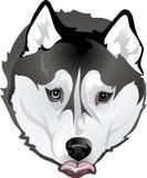 Huskies die voedsel bedelen vector illustratie