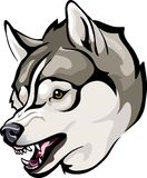 Huskies evil grin. Vector illustration of an evil grin Huskies Stock Images
