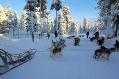 Huskies i Lapland Arkivbilder