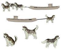 Huskies och Komatik Arkivbilder