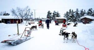 Huskies som väntar för att gå på en släderitt Royaltyfri Fotografi