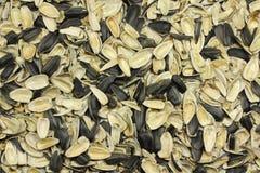 Husks of sunflower seeds Stock Image