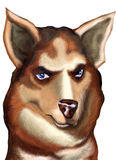 Husky. Siberian Husky face royalty free illustration