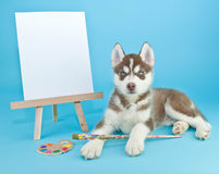 Husky Artist Stock Photo