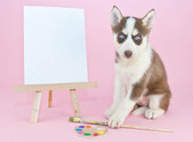 Husky Artist Royalty Free Stock Images