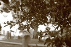 Husky Branches Royalty-vrije Stock Afbeelding