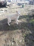 husky stock foto's