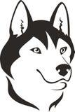 Husky dog. Head,illustration isolated on the white Royalty Free Stock Images