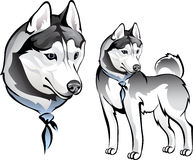 Husky dog in bandana. Vector drawing of the dog Laika in bandana Royalty Free Stock Photography