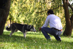 A husky dog is being watchful Royalty Free Stock Photo
