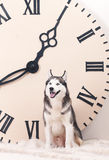Dog and big clock Stock Photos